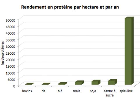 rendement en protéine par hectare