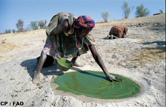 spiruline au Tchad