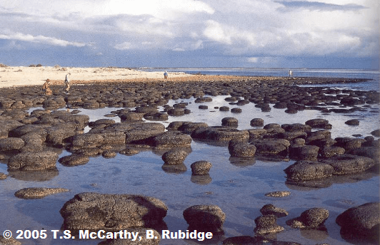 stromatolithes